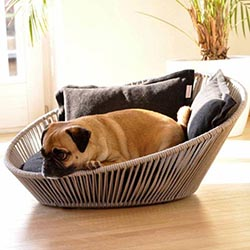 pug-laying-in-dog-bed