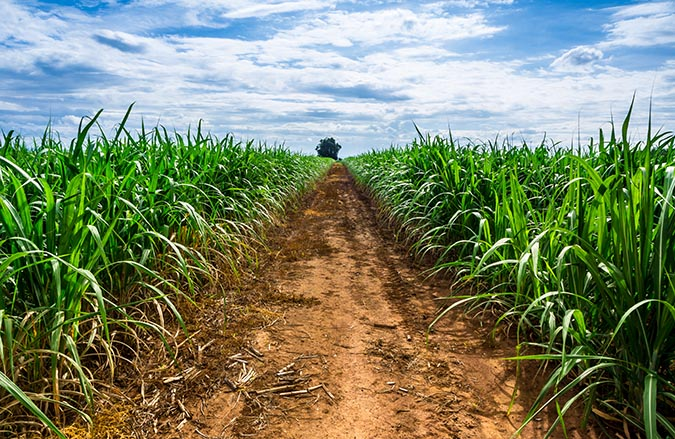 road-in-sugarcane-farm-and-blue-sky