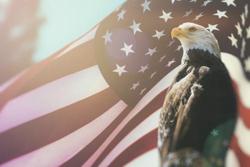 American Bald Eagle Flag Patriotism